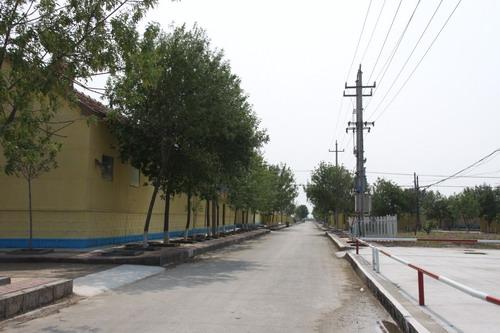 37002 河口街道东劝学村 -河口美丽乡村 评选图片